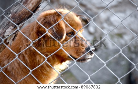 Dog locked in cage