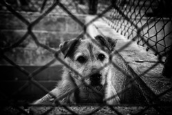 Dog locked in kennel, abandoned animals and mistreated