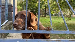 Dog look trough the fence