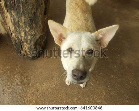 Dog look up #641600848