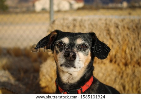 Dog looking at a Camera #1565101924