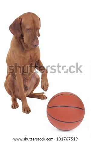 dog looking at basketball with a paw raised in air
