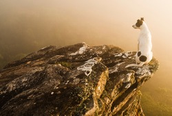 Dog looking at fog over rocks in Brazil