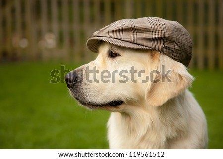Dog looking away with old tradional hat on her head