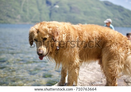Dog looking into sea #710763664