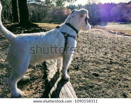 Dog looking into the distance #1090158311