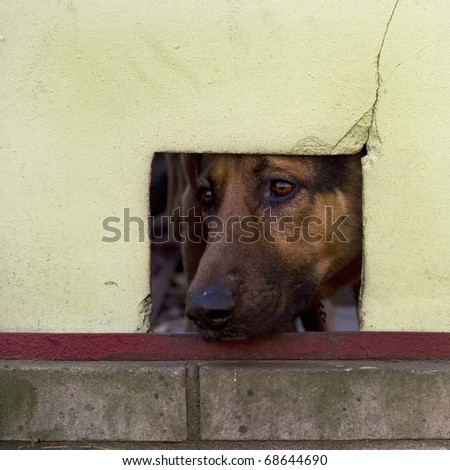 Dog looking through a window cut out in the fence