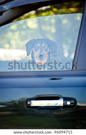 Dog looking through a window from a car
