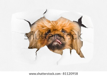 Dog looking through hole on paper surface