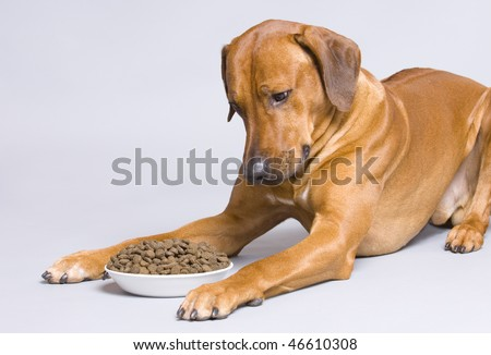 Dog lying at full food bowl