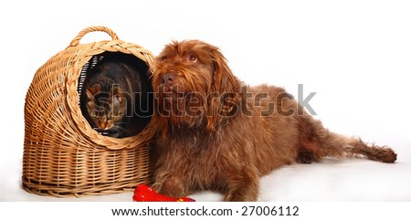 Dog lying nearby cat sitting in the wicker house