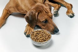 Dog lying next to bowl of dry food. Not hungry dog.