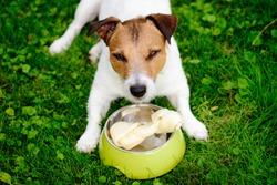 Dog lying on grass guards rawhide bone in doggy bowl
