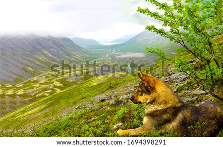 Dog lying on mountain hill. Dog in mountains. Dog at mountain valley