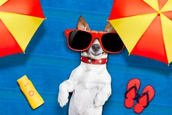 dog lying on towel under shade of umbrella relaxing and chilling out in the summer vacation taking a selfie
