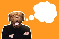 Dog-man on orange background. Man with dog's head. Copy space in dialog cloud. Man on orange background. He stands with his arms crossed. Portrait of dog in magazine style. Art portrait businessman