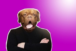 Dog-man on purple background. Dog with body of man crossed his arms. Business art illustration. Art portrait of businessman. Portrait businessman in magazine style. Business Aggression Metaphor