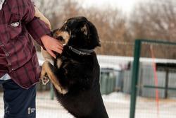 Dog. Mongrel dog and volunteer. A shelter for homeless animals. Help for homeless animals. A dog shelter.