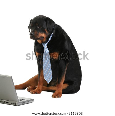 dog monitoring the activity on the computer, isolated on white, concept of internet security