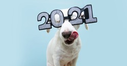 dog new year with  wearing glasses with the inscription