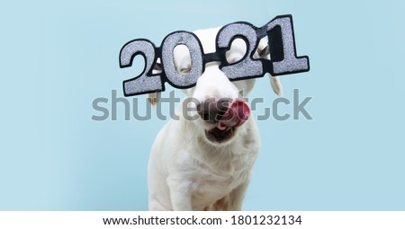 dog new year with  wearing glasses with the inscription '2021', isolated on blue background Photo stock ©