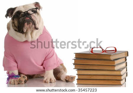 dog obedience school - english bulldog sitting beside a stack of books - stock photo