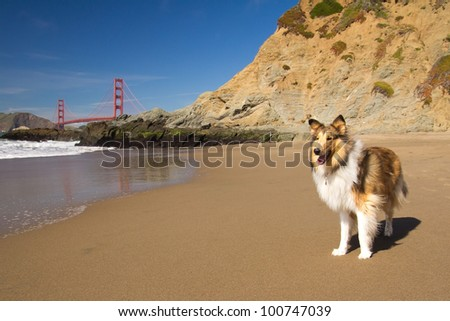 Dog on a beach with the Golden Gate Bridge in the background