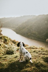 Dog on a hike in nature