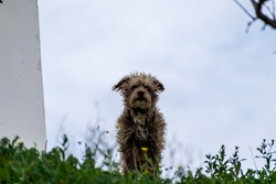 dog on a hill looking at you