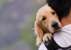 Dog on a man shoulders
