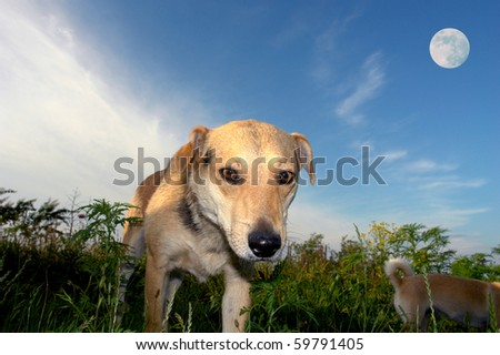 Dog on a meadow on a background of the moon - stock photo