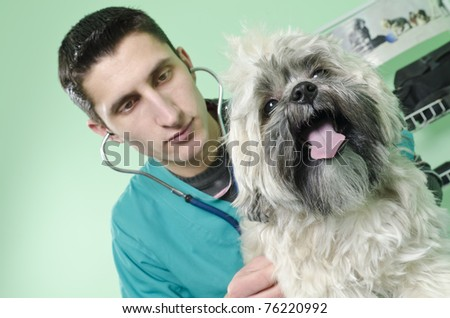 Dog on a veterinary consult