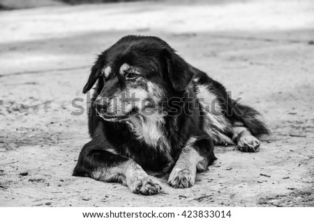 Wonderful Sad Black Adorable Dog - stock-photo-dog-on-background-thai-puppy-thailand-puppy-black-fur-sad-puppy-sad-puppy-on-a-background-of-black-423833014  Pic_249817  .jpg