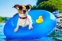 dog on  blue air mattress  in refreshing  water