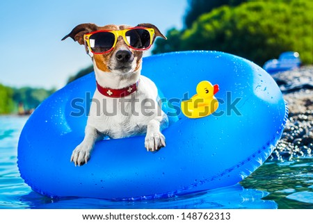 dog on  blue air mattress  in refreshing  water