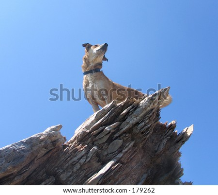 Dog on cliff