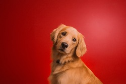 Dog on Red Background