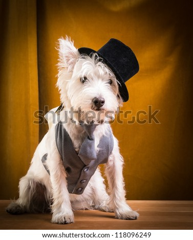 Dog on stage with top hat, vest and tie