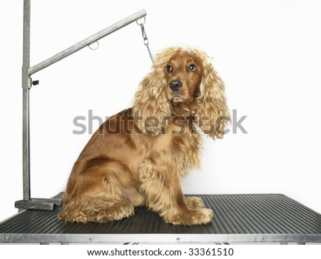 dog on table top secured by chain
