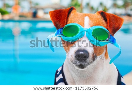 83a4d10ca45 Free photos Jack Russell Terrier with glasses on a white background ...