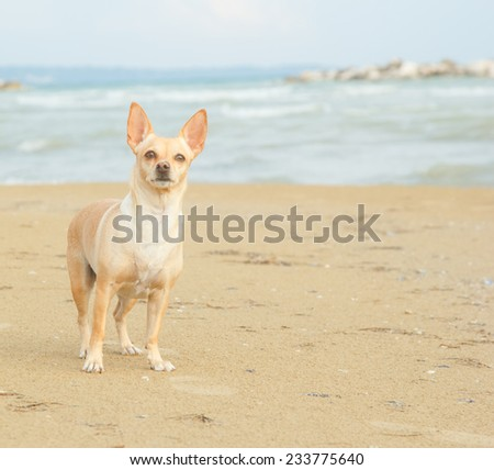 Dog on the beach near the sea or ocean water. Walking the dog near the water. Together with his dog to go on vacation and do the walk. Beach, sea, animals, dog, ocean, fresh air - concept of lifestyle