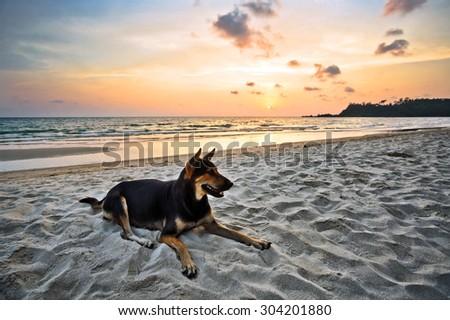 Dog on the beach under sunset sky