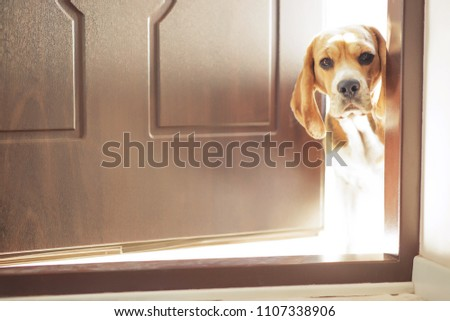 Dog on the doorstep of the house
