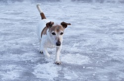 dog on the frozen river