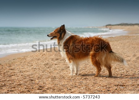 Dog on the lonely beach looking on faraway