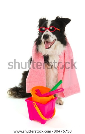 Dog on vacation with sunglasses and beach toys