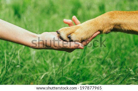 Dog paw and human hand are doing handshake on nature, friendship