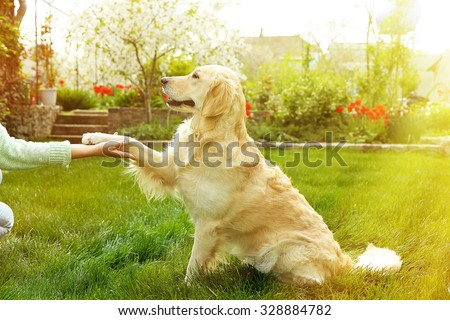 Dog paw and human hand doing a handshake, outdoors