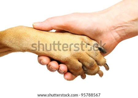 Dog paw and human hand doing handshake. Isolated over white.