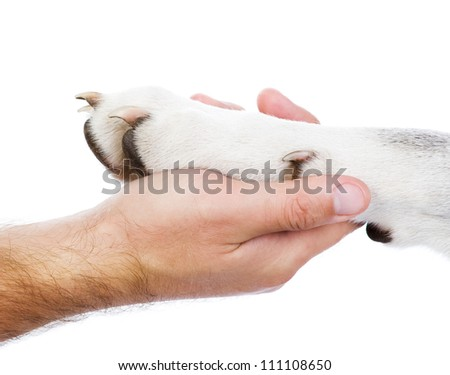 Dog paw and human hand. isolated on white background